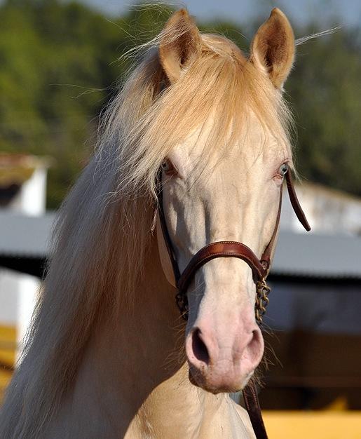¿Por qué el caballo?